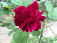 image-20141017134453.png
